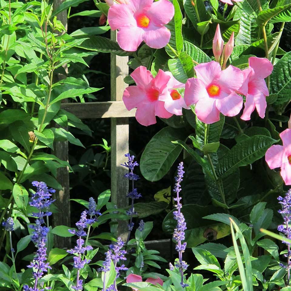 Flowers and Lattice