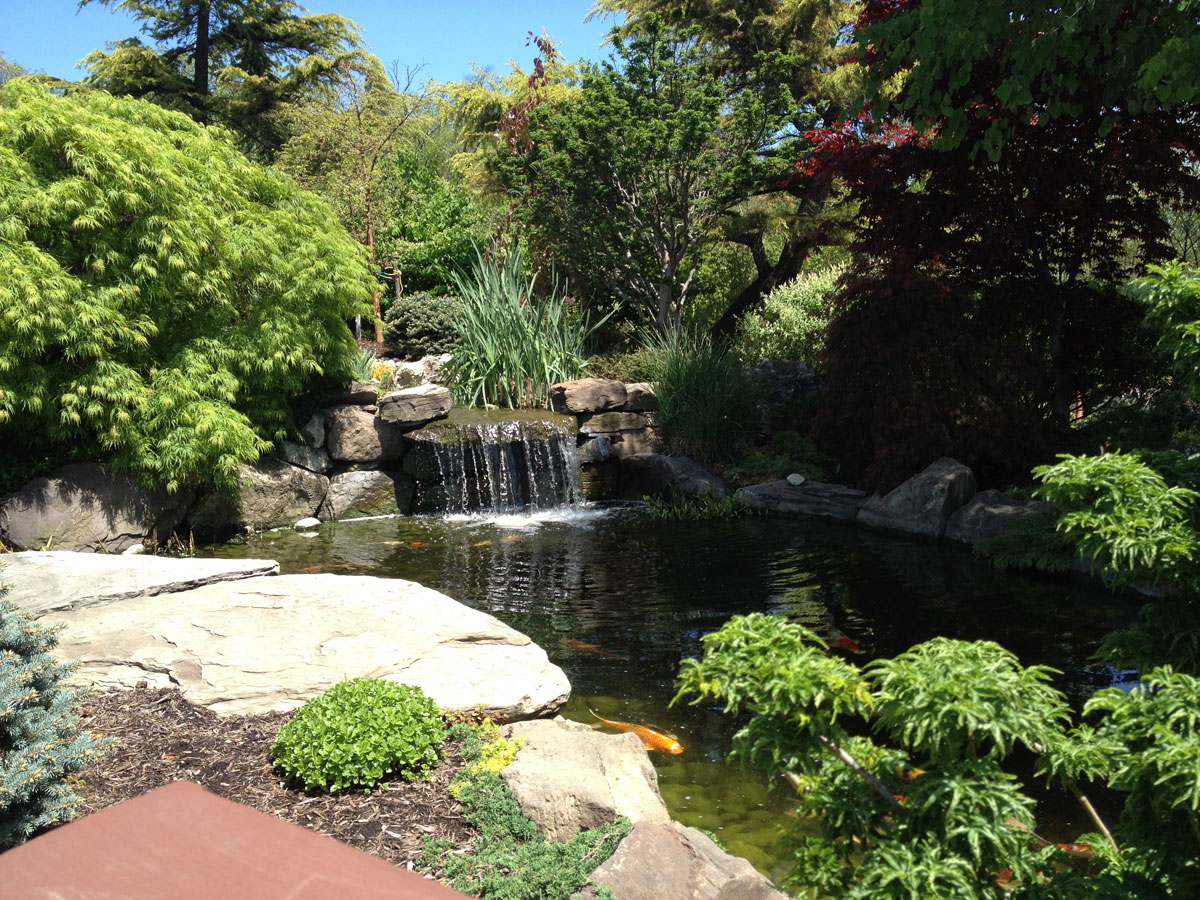 Koi ponds and fish down to earth living for Pond retailers