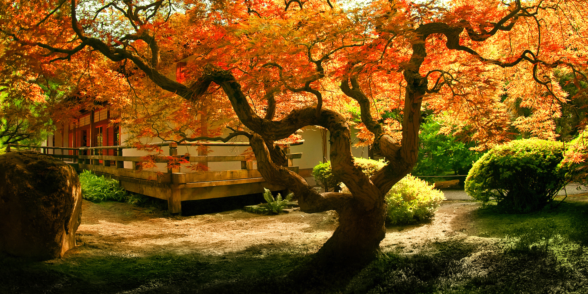 visual-garden-maple - Down to Earth Living