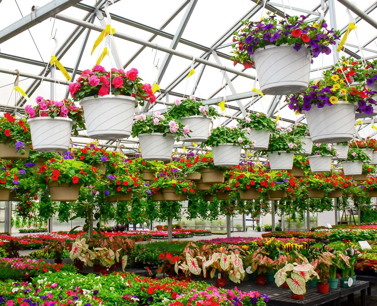 Hanging Garden Baskets