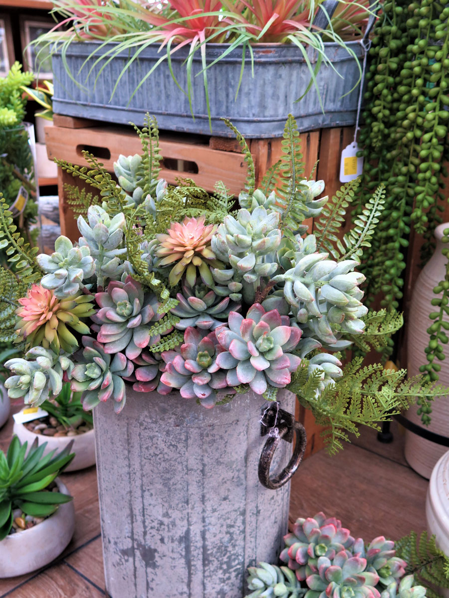 A Huge Assortment of Succulents!