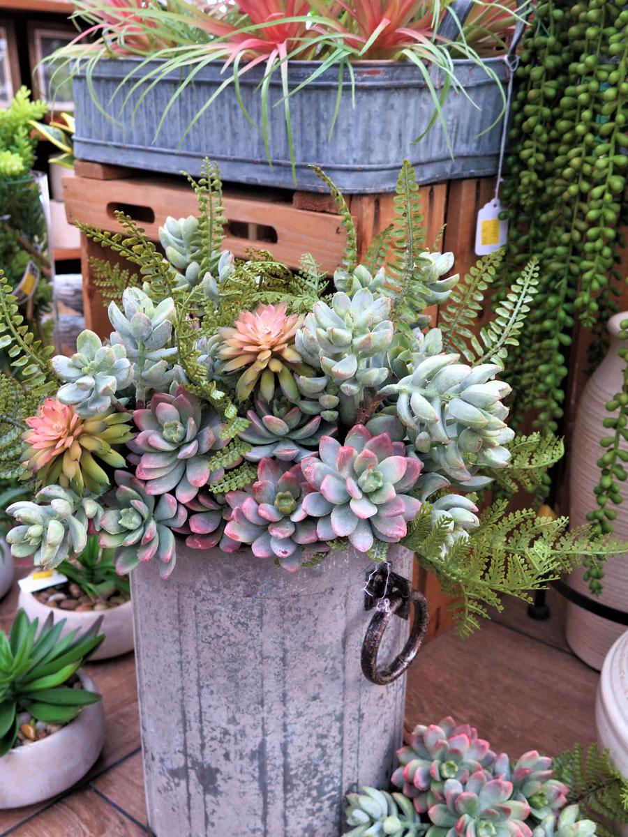 A Huge Assortment of Succulents!