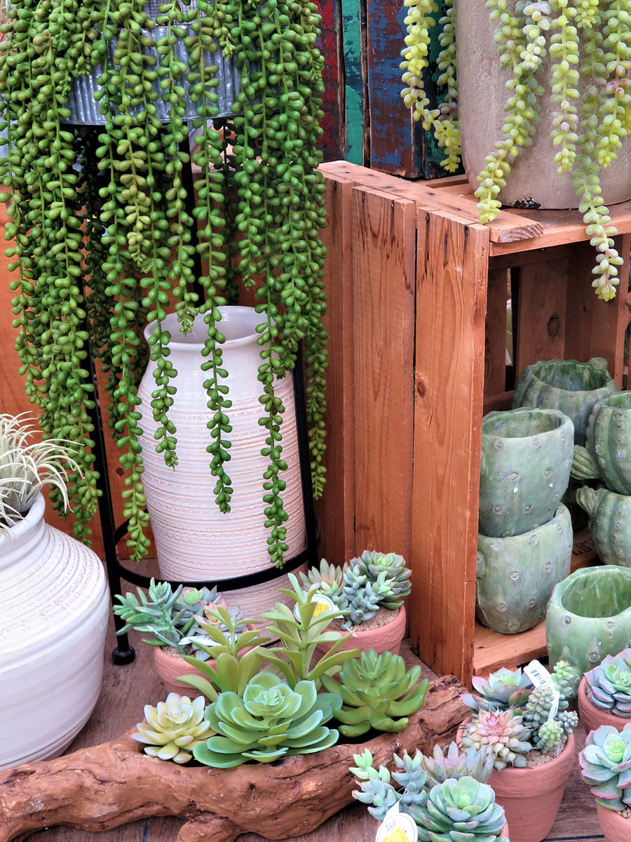 Stunning Succulents and a Wide Selection of Pots and Planters