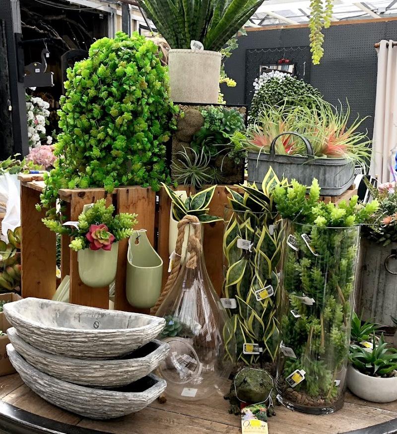 Unique Plants and Planters