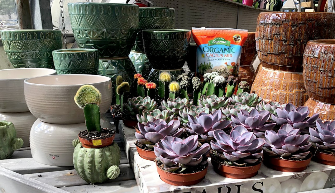 Succulents and Ceramic Pots