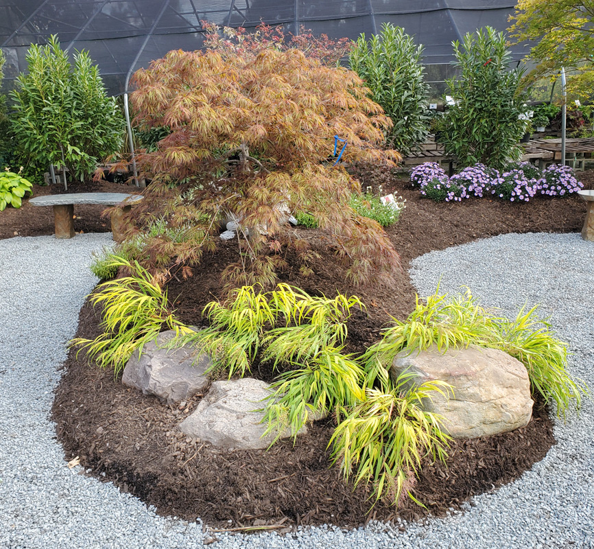 Japanese Maple Garden