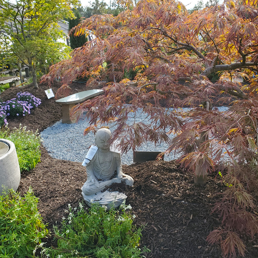 Japanese Maples and Buddha Statue