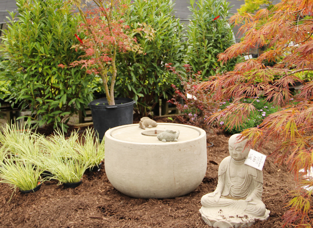 Japanese Maples with Fountain and Buddha Statue