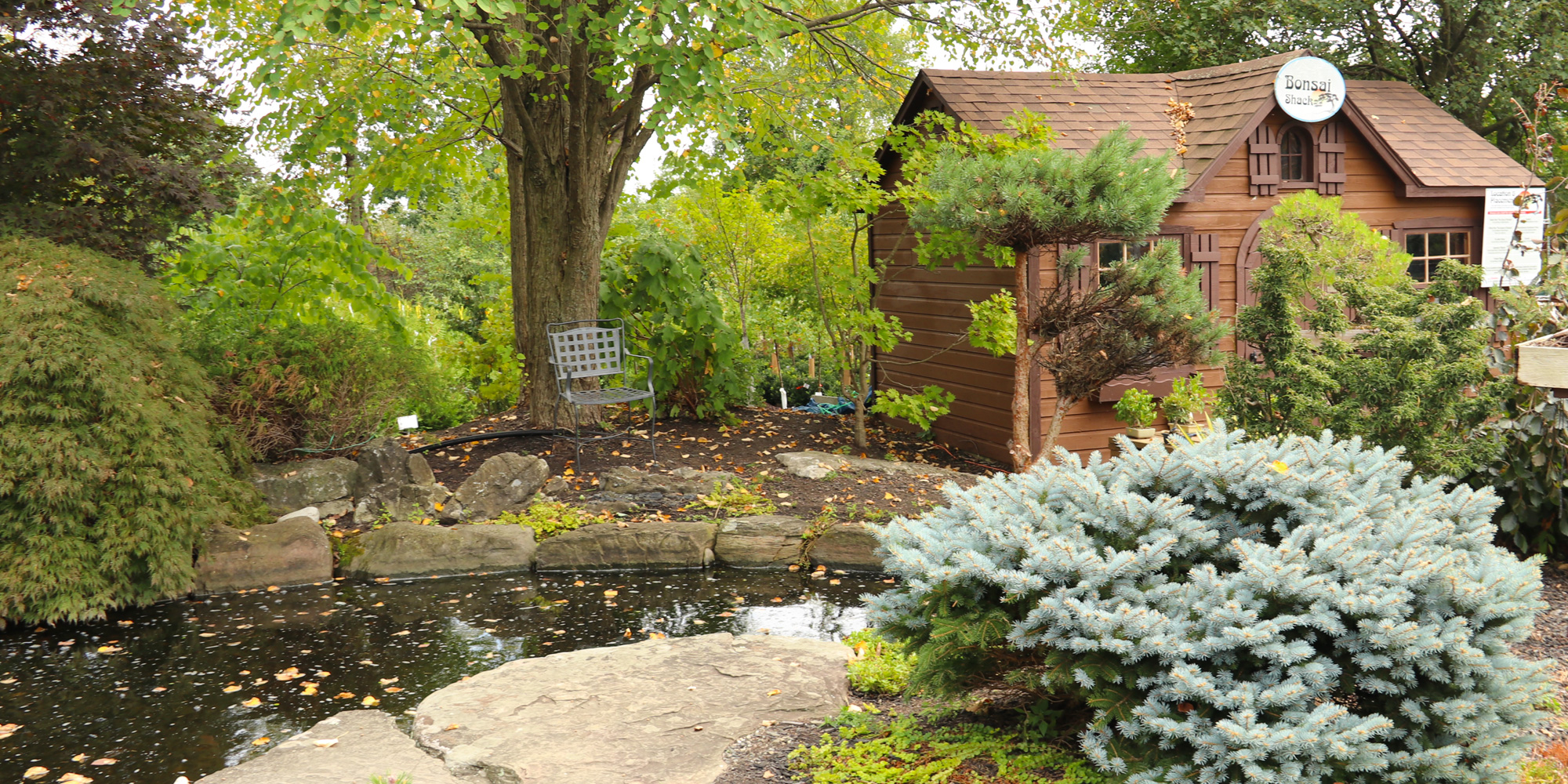 The Koi Pond and Bonsai Shack at Down to Earth