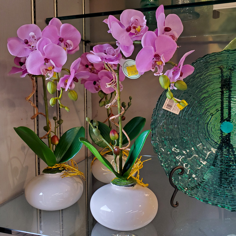 Orchids and Vases
