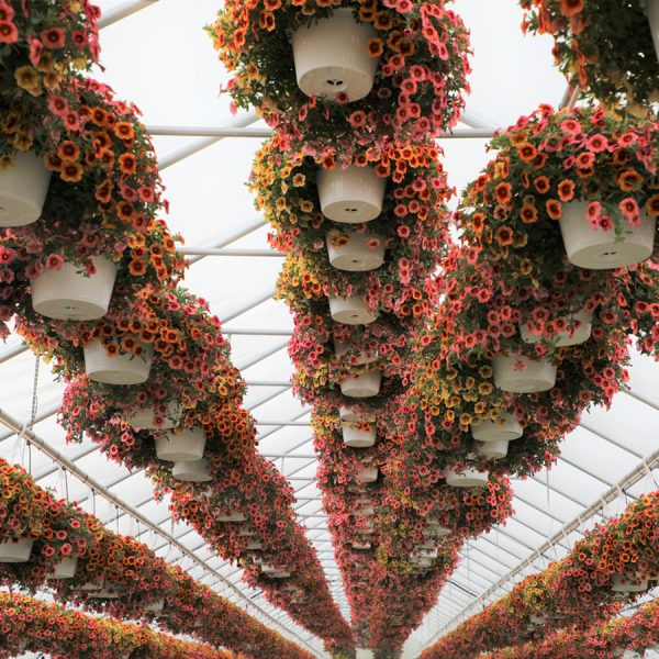 """10"""" Hanging Baskets for Sun"""