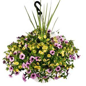 Spring Combo #4 – Hanging Basket