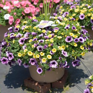 Spring Combo #4 – Patio Planter