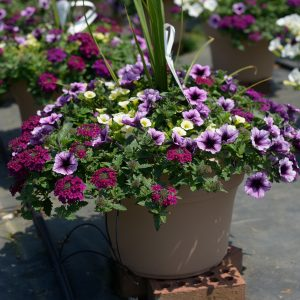 Spring Combo #3 – Patio Planter