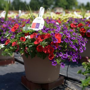 Spring Combo #12 – Patio Planter