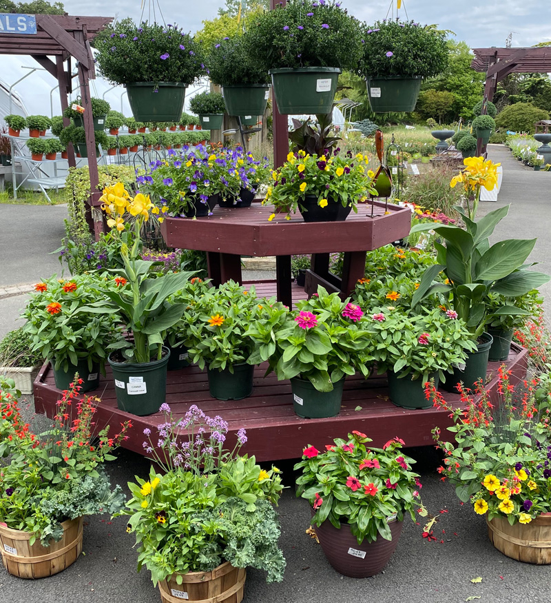 Browse our Huge Selection of Flowering Plants