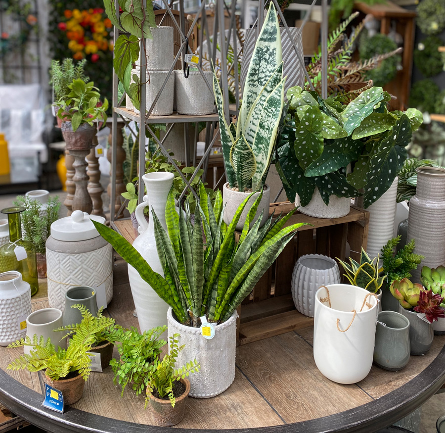 Houseplants and Planters