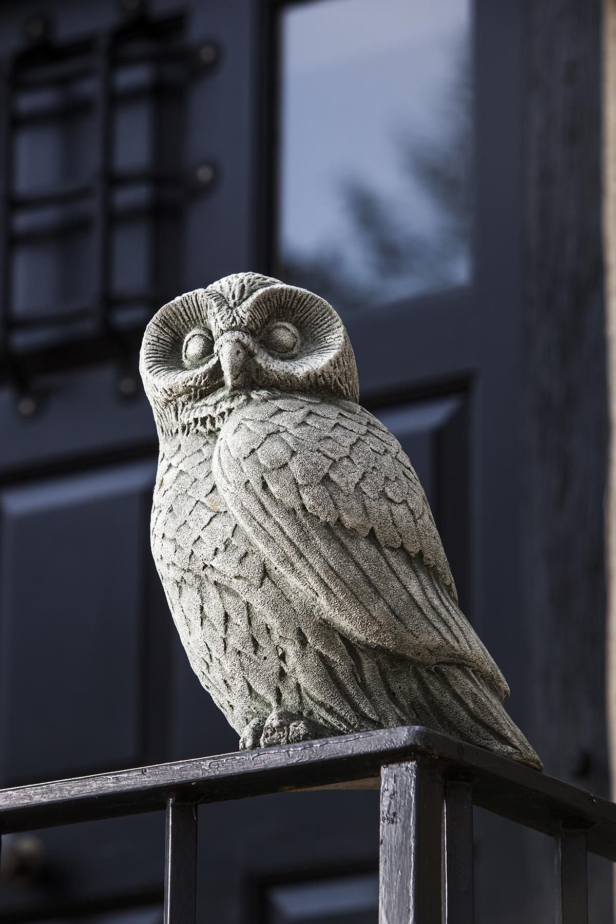 Barny the Owl