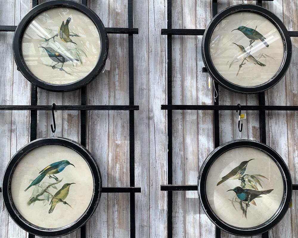Circular Framed Bird Prints