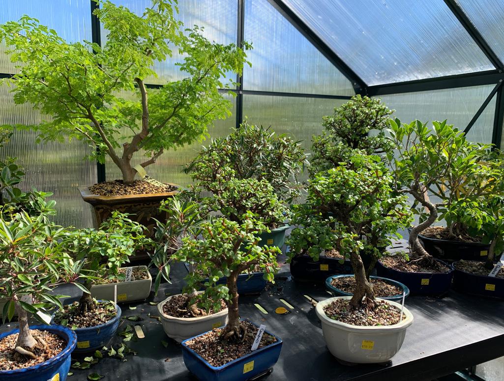Gorgeous Bonsai Trees