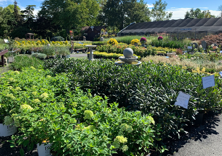 Plants and Shrubs in our Garden Center