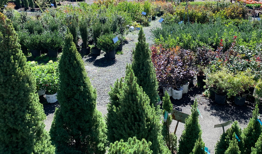 Trees, Shrubs, Plants and More at the Down to Earth Garden Center and Plant Nursery