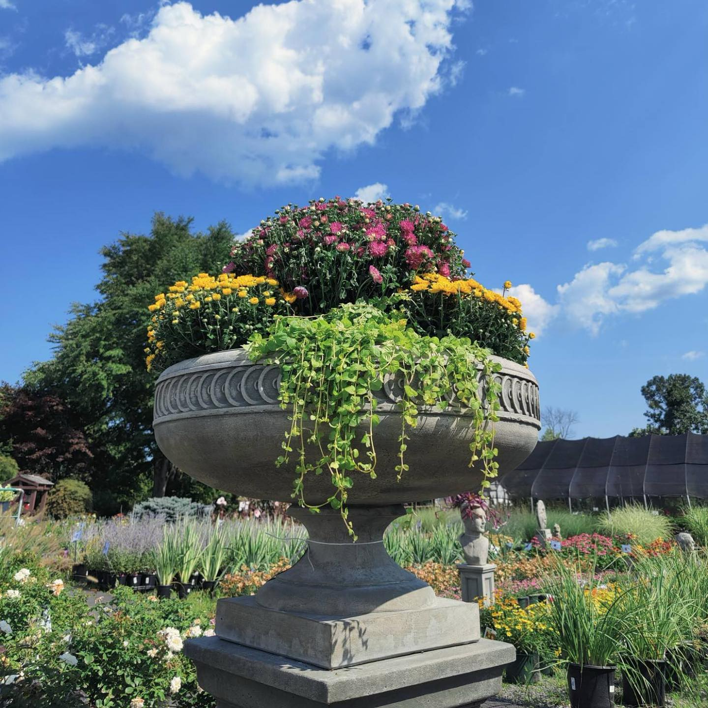 Classical Planter Filled with Mums and Ivy