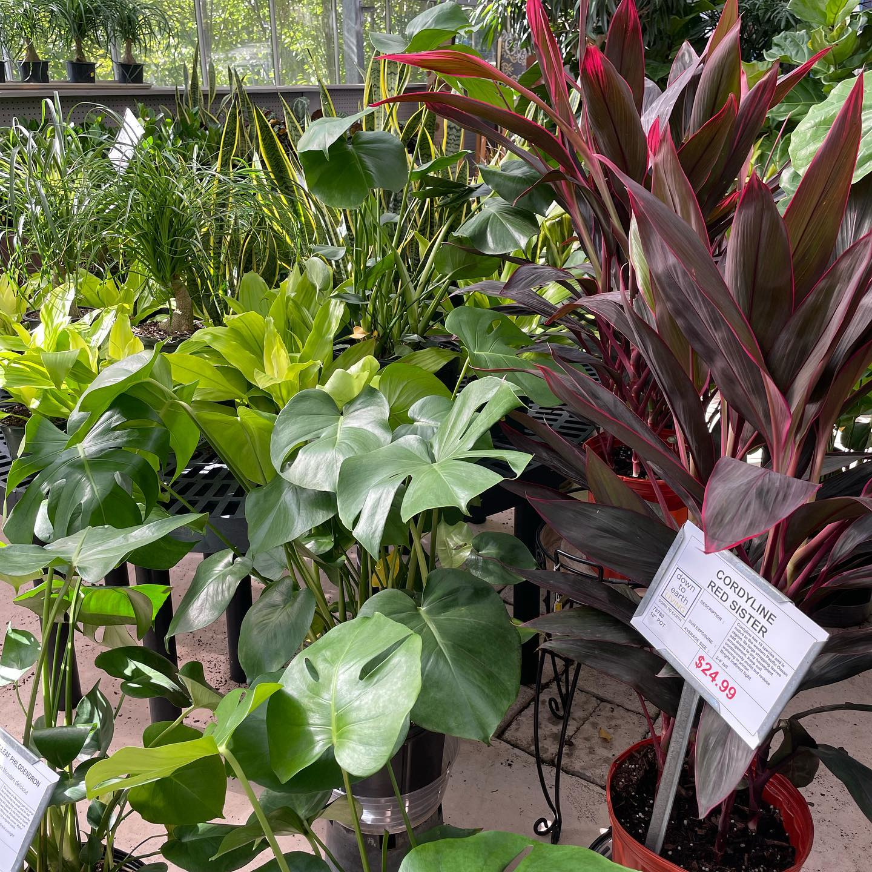 Gorgeous House Plants