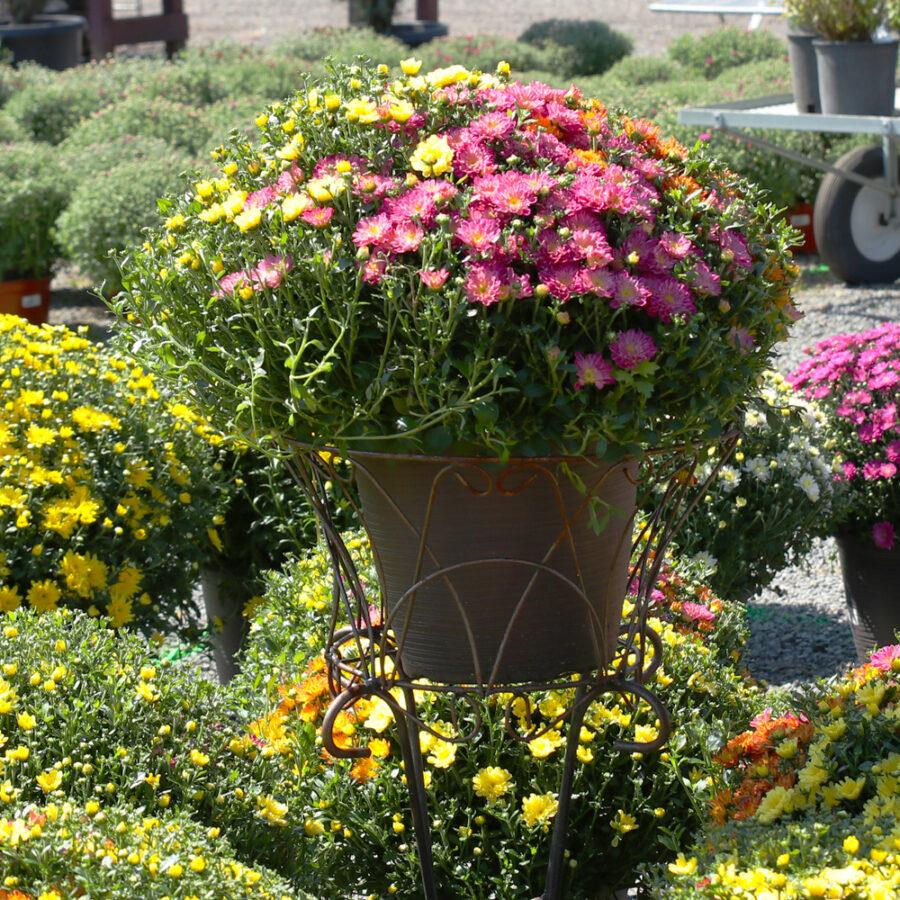 Free Gardening Workshops! Sunday, October 3rd, 2021