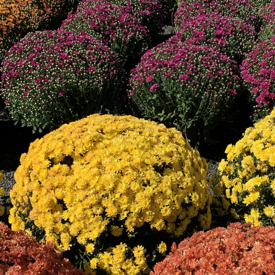 Discover the Advantages of Fall Planting